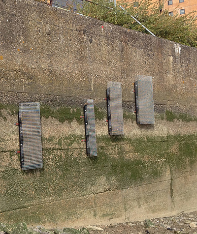 Green Walls project at North Woolwich by Love the Lea. Photo courtesy Thames21.
