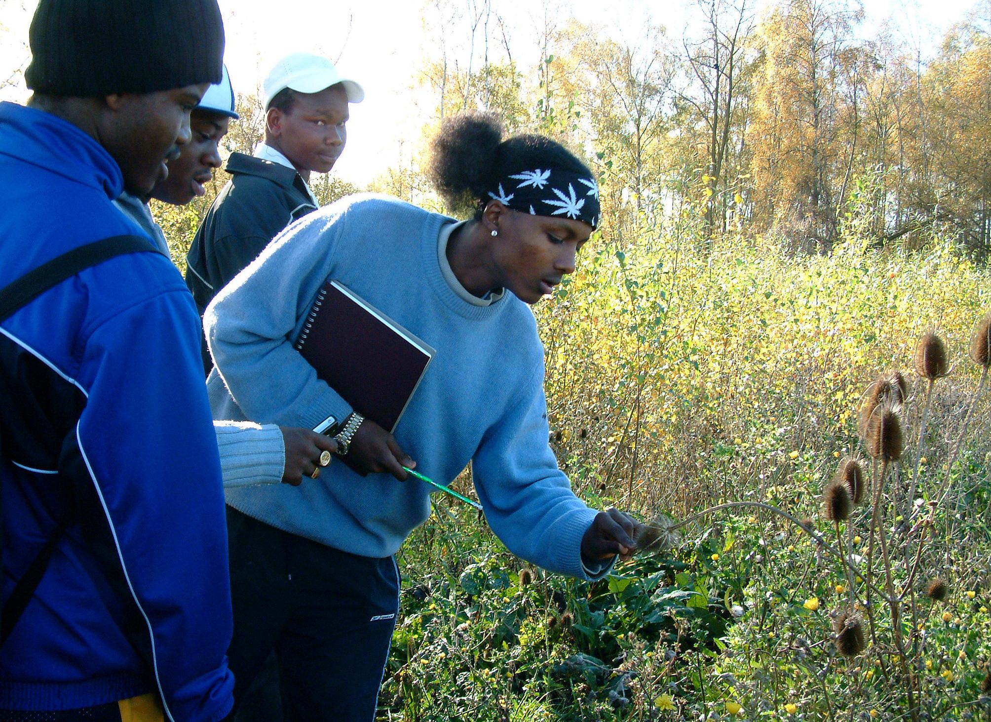 Investigating flora